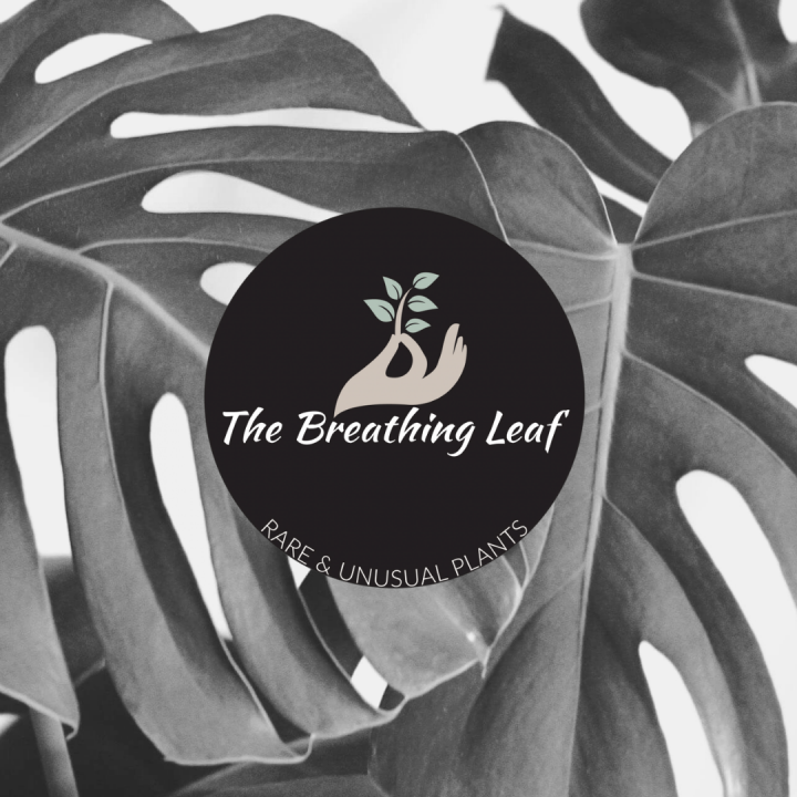 The Breathing Leaf